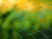 与雨水滴的防护庭院网  免版税库存照片