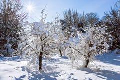 与雪包括的二个结构树的冬天横向 免版税库存照片