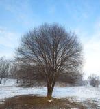 与雪和一棵偏僻的树的冬天在领域 免版税库存照片