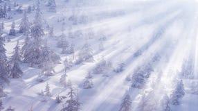 与雪和冷杉木的美好的冬天风景在山 魔术冬天 免版税库存照片