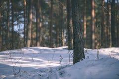 与雪和树干在寒冷-葡萄酒r的冬天农村场面 库存图片