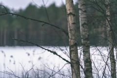 与雪和树干在寒冷-葡萄酒r的冬天农村场面 免版税库存照片