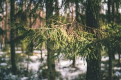 与雪和树干在寒冷-葡萄酒r的冬天农村场面 免版税图库摄影