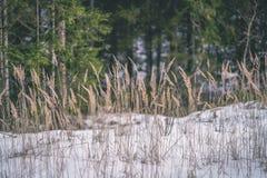 与雪和树干的冬天农村场面在寒冷和草b 免版税库存图片