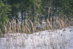 与雪和树干的冬天农村场面在寒冷和草b 库存图片