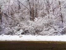 与雪和树的一个山风景在前面 免版税库存照片