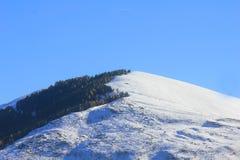 与雪和树的山 库存照片