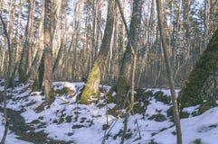 与雪和白色的冬天农村场面调遣葡萄酒作用 库存图片