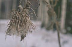 与雪和白色的冬天农村场面调遣葡萄酒作用 图库摄影