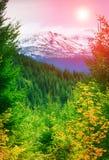 与雪和秋天树的山峰 库存照片