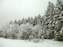 与雪和雾的冬天风景 库存图片