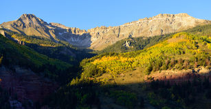 与雪和黄色白杨木风景的山 免版税库存照片