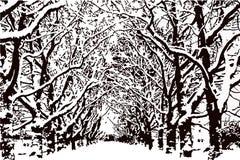 与雪在分支,公园传染媒介的不生叶的树 库存照片