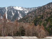 与雪山和森林的美好的场面 免版税库存照片
