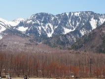 与雪山和森林的美好的场面 库存照片