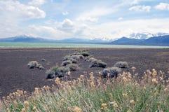 与雪山的单音湖岸在加利福尼亚 免版税库存图片
