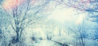 与雪树和路的美好的冬天国家风景 库存图片