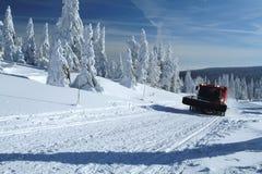与雪猫的冬天风景 免版税库存图片