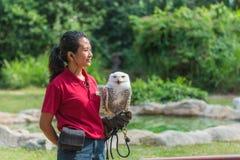 与雪猫头鹰的鸟教练员 图库摄影