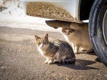 与雪的一个冷的冬日两只猫发现了在温暖的风雨棚 图库摄影