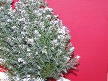 与雪的一棵绿色xmas树 免版税库存照片