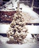 与雪的一点杉树在分支和雪花冬天 库存图片