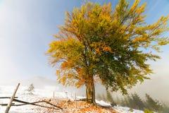 与雪的五颜六色的秋天树 免版税图库摄影