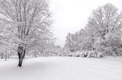 与雪的冬天在树 图库摄影
