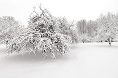 与雪的冬天在树 免版税库存照片