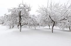 与雪的冬天在树 库存照片