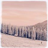 与雪的冬天风景在山喀尔巴汗,乌克兰 vi 免版税库存照片