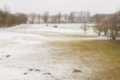 与雪的冬天风景开放领域 库存照片
