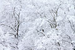 与雪的冰冷的树 免版税库存图片