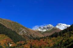 与雪的山在与五颜六色的森林的秋天风景 免版税库存图片