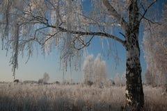 与雪的树在冬天 库存图片