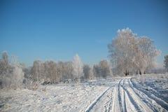 与雪的树在冬天 免版税库存图片