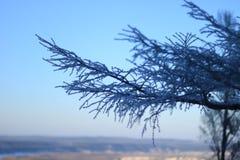与雪的树在日落下 免版税库存照片