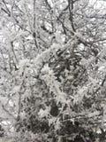 与雪的树枝 图库摄影