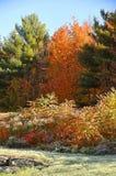 与雪的秋天风景 免版税库存照片