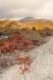 与雪的秋天风景 库存图片