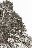 与雪的结构树 免版税库存图片