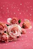 与雪的美丽的桃红色玫瑰 库存图片