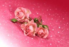 与雪的美丽的花玫瑰 免版税库存图片