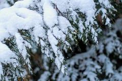 与雪的结构树 库存图片