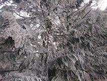 与雪的冻树 免版税库存照片