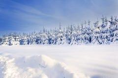与雪盖的树的冬天风景 库存图片
