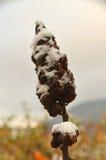 与雪5的秋天风景 免版税库存照片