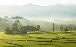 与雾和薄雾的惊人的风景早晨 免版税库存图片