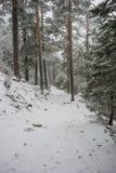 与雾在背景中, Na口岸的美好的多雪的风景  图库摄影