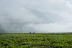 与雾的一个领域 免版税图库摄影